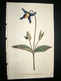 Curtis 1787 Hand Col Botanical Print. Virgin's-Bower #65,